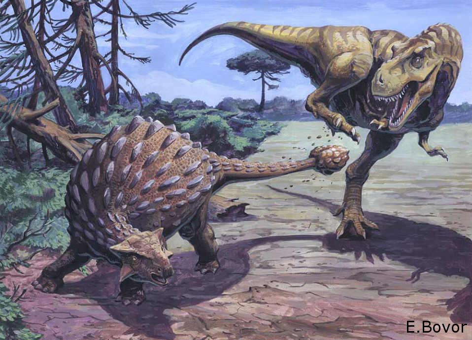 Tyrannosaurus Rex Vs Ankylosaurus | www.pixshark.com ...